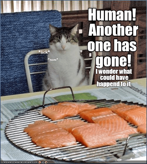 a meme of a cat telling his human that another piece of salmon has gone missing