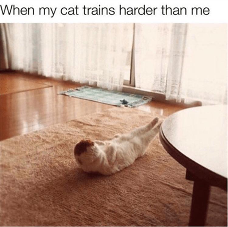 Memes Cats funny - 9061036288