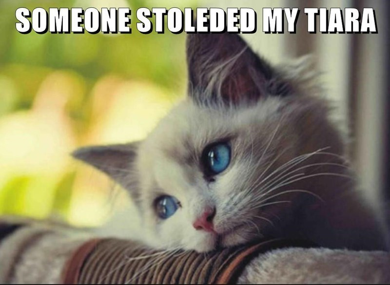 Memes Cats - 9061037312