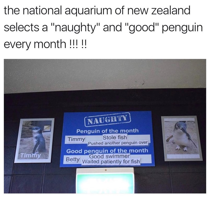 Funny meme about nice penguins and naughty penguins at New Zealand zoo.