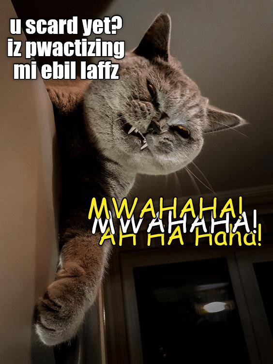 cat meme funny cats - 9061191168