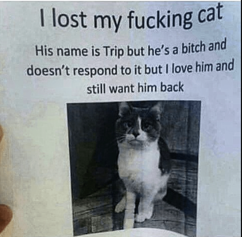 Cat - lost my fucking cat His name is Trip but he's a bitch and doesn't respond to it but I love him and still want him back