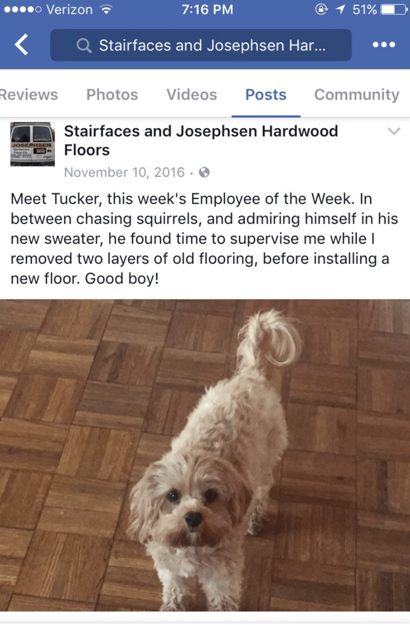 Dog - o Verizon 7:16 PM 1 51% Q Stairfaces and Josephsen Har... Community Reviews Photos Videos Posts Stairfaces and Josephsen Hardwood Floors JOSEPHSE November 10, 2016 Meet Tucker, this week's Employee of the Week. In between chasing squirrels, and admiring himself in his new sweater, he found time to supervise me while I removed two layers of old flooring, before installing new floor. Good boy! а