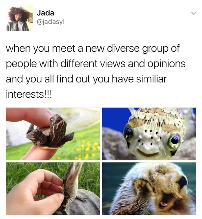 cute animal meme of finding a diverse group of people and you find you have similar interests.