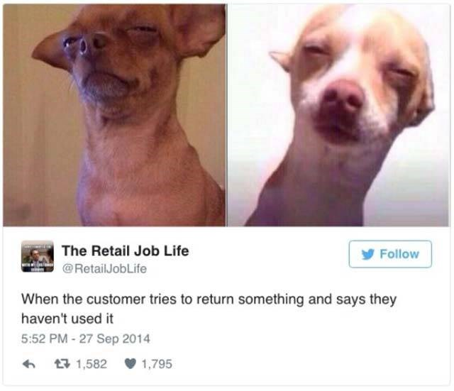 Retail meme of skeptical chihuahua about the feeling when customer tries to return something that they say they haven't used.