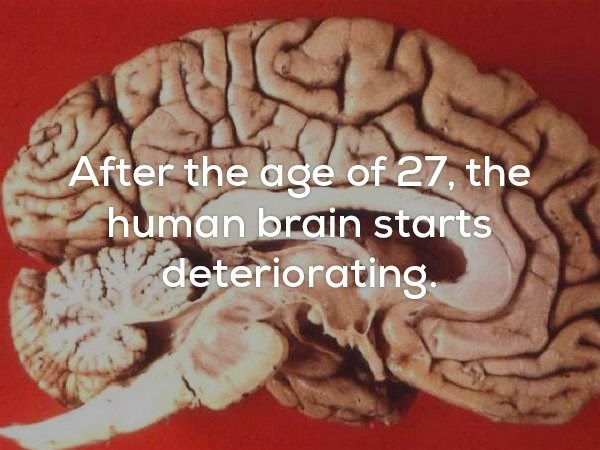 Sad meme about how the human brain starts to deteriorate after the age 27