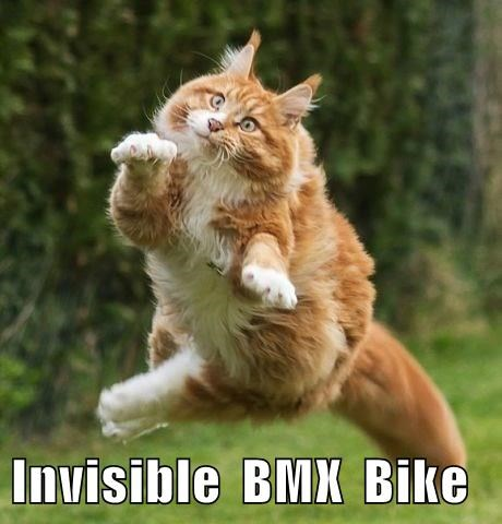 funny cat meme of what looks like cat riding an invisible BMX bike