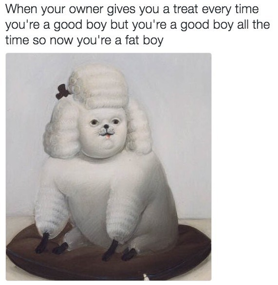 photo of a fat dog