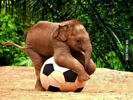 Elephant - VIA 9GAG.COM
