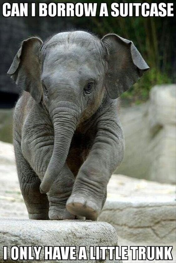 Elephant - CAN I BORROW A SUITCASE 1ONLY HAVEA LITTLE TRUNK