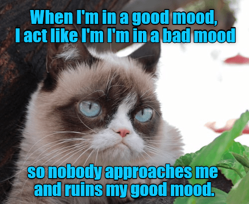 Grumpy Cat cat meme cat logic - 9061892352