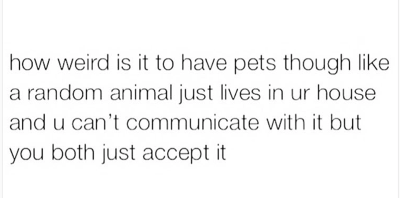 Funny thought meme about how weird it is to have pets which is a random animal living your house that you can't communicate with and you both just accept it.