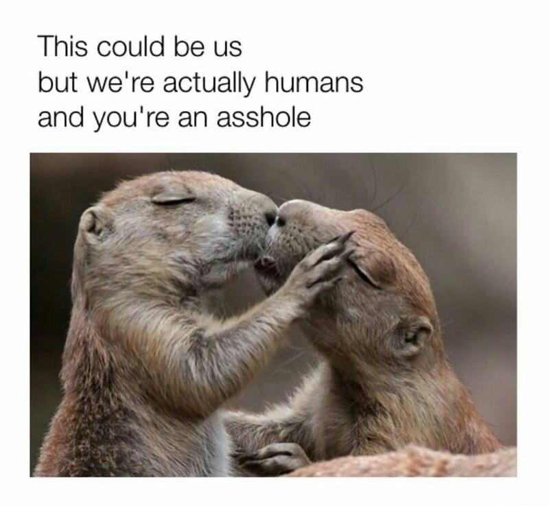Meme of otters kissing and how that could be us but you're an asshole.