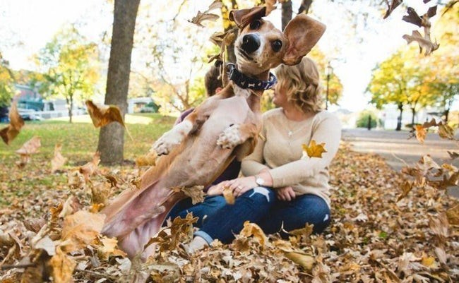 Cute couple canoodling in the leaves photobombed by a dog in a GET DOWN MR PRESIDENT pose.