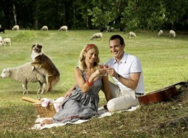 Romantic couple having a picnic by the countryside with roam sheep ruined by their dog hilariously defiling one of those sheep .