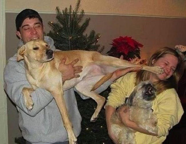 face kicking dog ruins Christmas photo