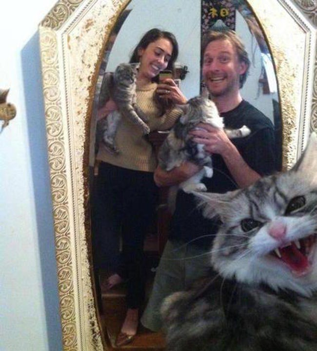 snarling cat in an otherwise cute picture of a couple with a bunch of cats.