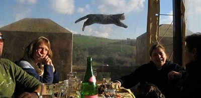 Epic photobomb of couple having wine in a castle with perfectly timed photobomb by cat in the background.