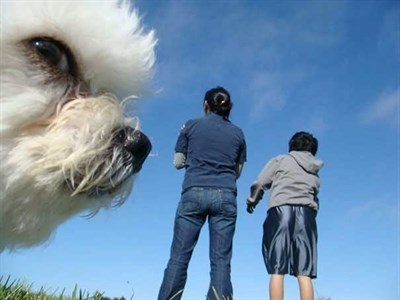 Dog makes this picture lit by photobombing the left side of an otherwise useless photo.