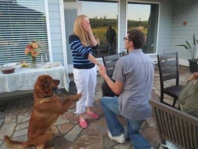 Begging dog ruins proposal pic