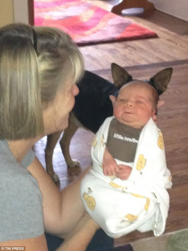 Pic of newborn baby made to look like he has horns because of the dog right behind him in the picture.