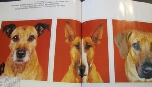 Alexander McQueen's dogs to which he left $82,000