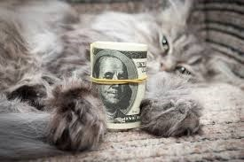 Picture of a cat holding a wad of hundred dollar bills rolled up with rubberband.