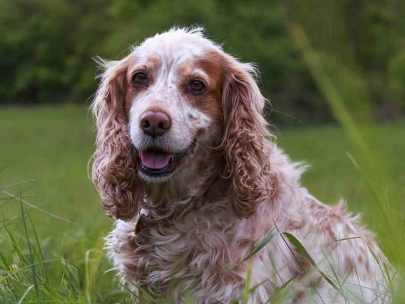 happy dog in grass field