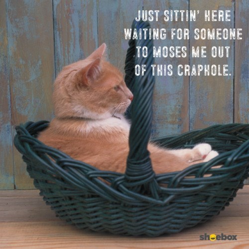 photo of a cat sitting in a basket