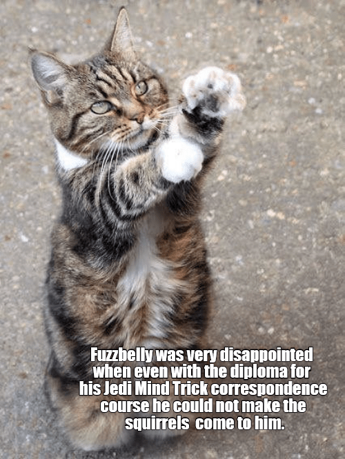 lolcats Memes Cats funny - 9062079488