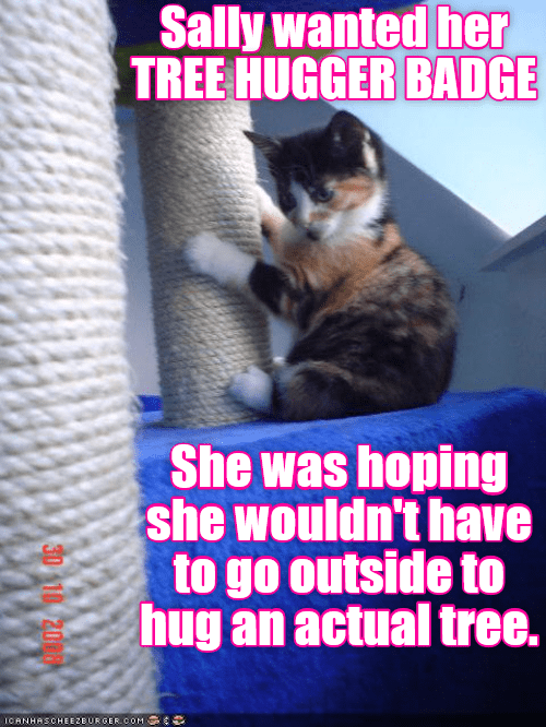 a funny cat meme from lolcats that shows how a kitten doesnt want to go outside to clim a tree