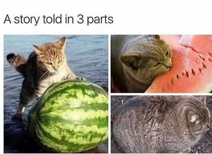memebase watermelon all your memes in our base funny memes