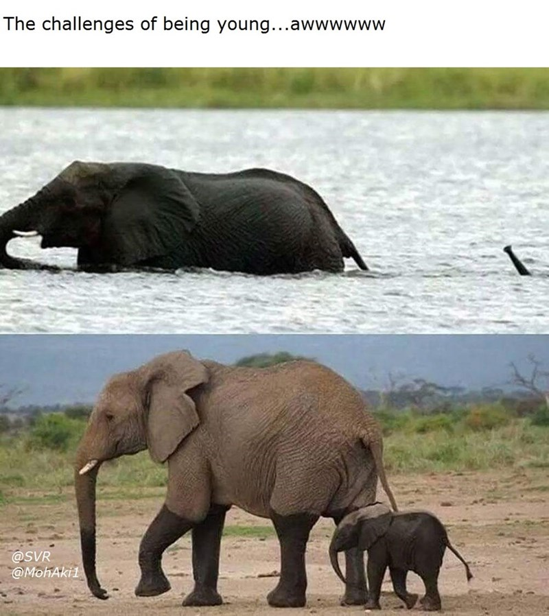 Elephant - The challenges of being young...awwwwww @SVR MohAki1