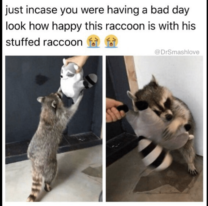 Joyful meme of a happy raccoon with his stuffed raccoon friend.
