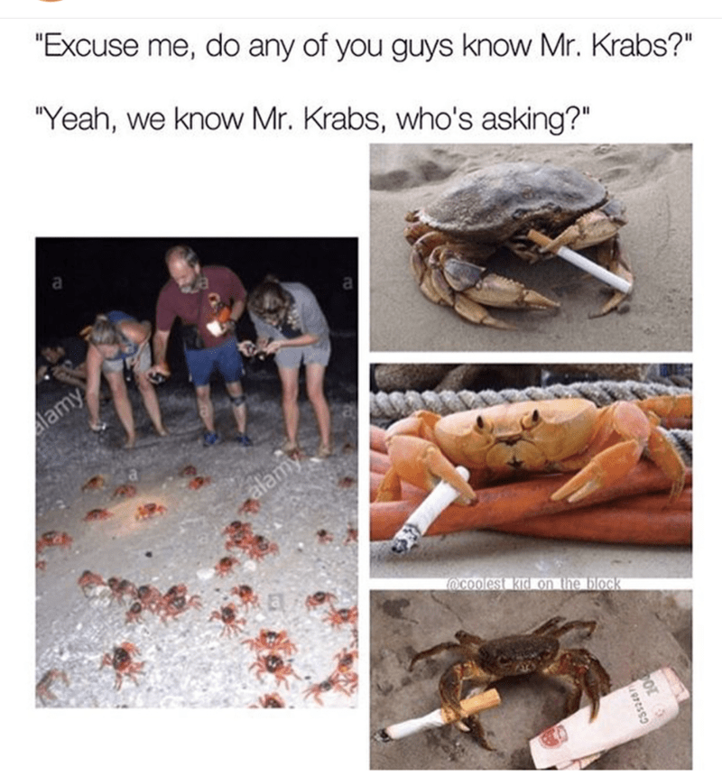 Funny meme of people feeding crabs with joke caption do you know Mr. Krabs and funny pics of crabs with cigarettes and one with money as asking who wants to know.