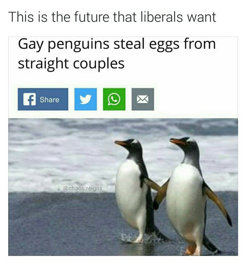 Funny meme about the future that liberals want - gay penguins steal eggs from straight penguins.