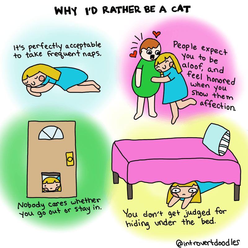 """Cartoon - WHY ID RATHER BE A CAT People expect You to be aloof, and feel honored when you Show the m t's perfectly acceptable to take freguent naps, affection. Nobody cares whether You go out or You don't get judged for hiding under the """"bed. tay in. @introvertdoodles"""
