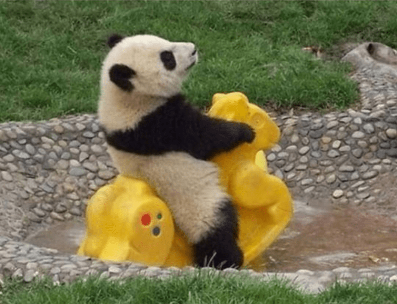 Panda playing on a rocking horse in the play ground.