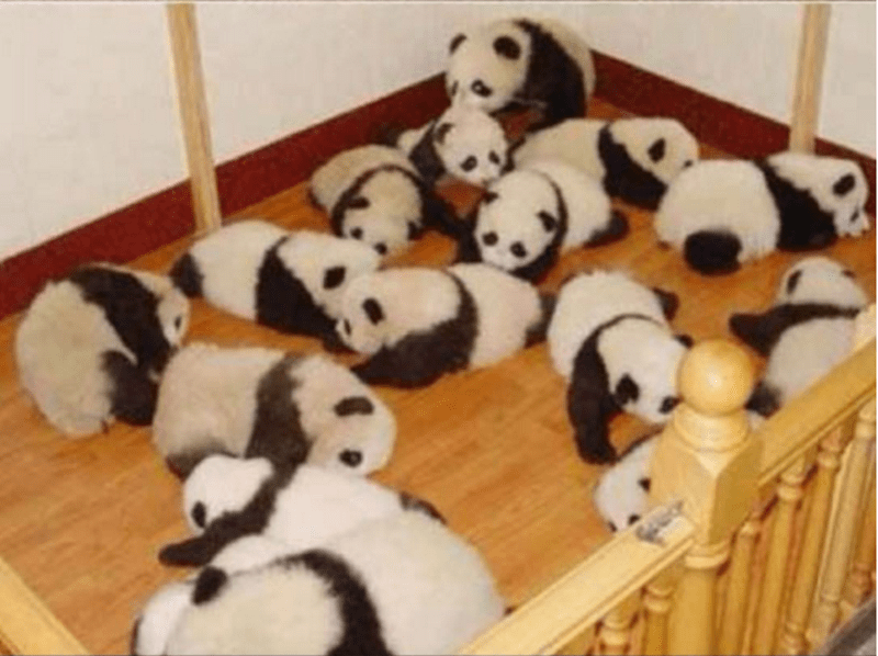 Passed out baby pandas on a wooden floor is what Panda daycare must look like.