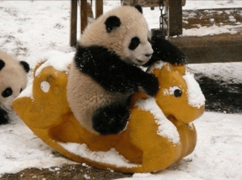 Panda on a rocking horse in the snow.