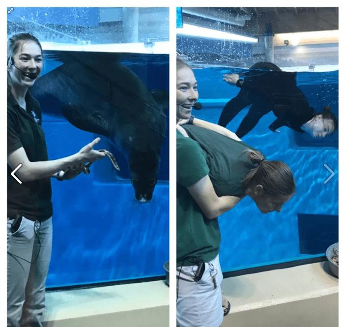 Zookeeper posing like a sea lion