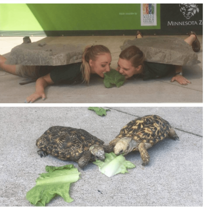 Zoo keepers acting like turtles