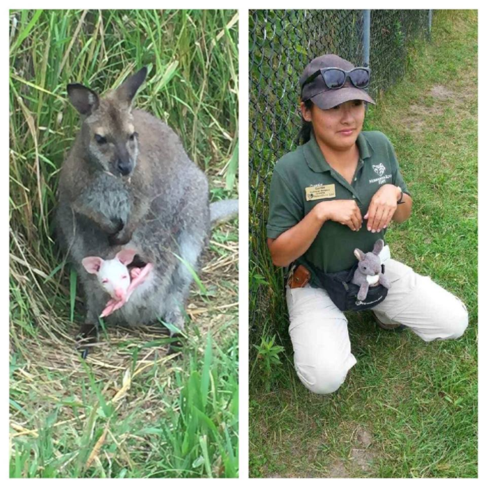 Minnesota Zookeeper imitating a kangaroo