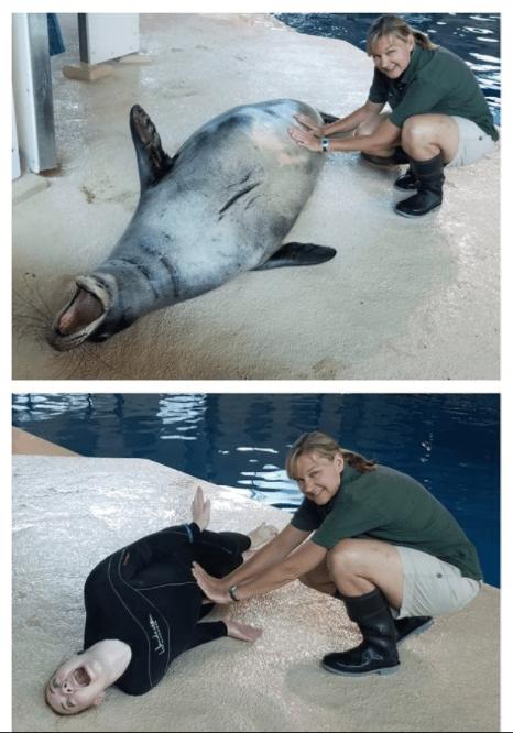 Minnesota zoo keeper posing like a happy sea lion