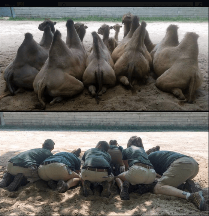 zookeepers posing like squatting camels