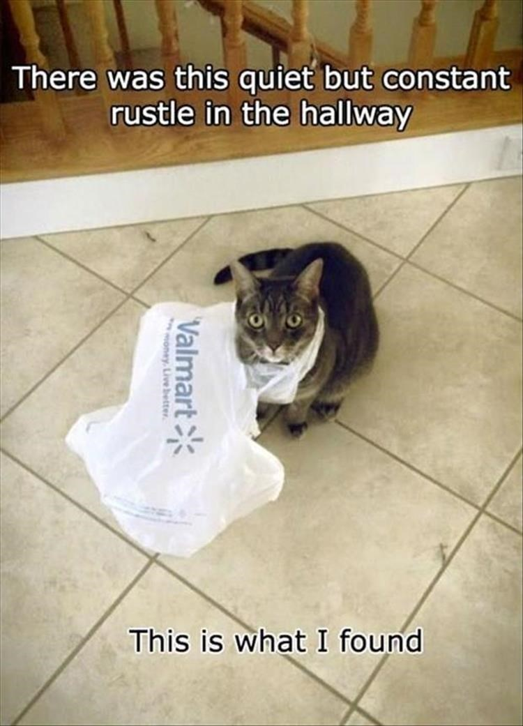 cat meme - Cat - There was this quiet but constant rustle in the hallway This is what I found Valmart money Livebetter