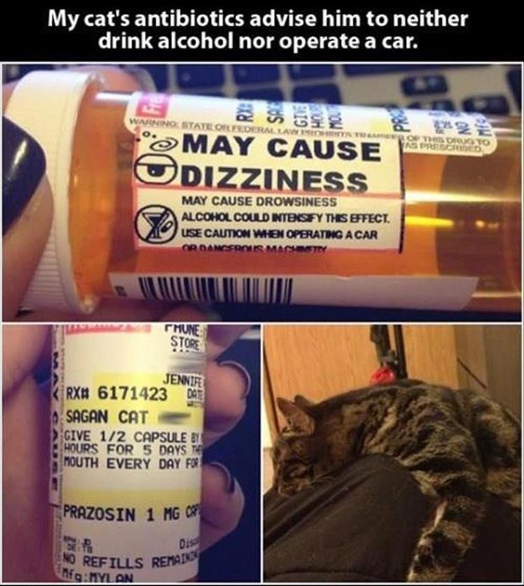 cat meme - Material property - My cat's antibiotics advise him to neither drink alcohol nor operate a car. WARNING STATE ORDERAL LAW RIO OF THS ORUG TO AS PRESCRDED TA MAY CAUSE DIZZINESS MAY CAUSE DROWSINESS ALCOHOL COULDINTENSIFY THIS EFFECT USE CAUTION WHEN OPERATING A CAR O8DANCEROUSMACH THUNE STORE JENNIF RX 6171423 DAE SAGAN CAT GIVE 1/2 CAPSULE B HOURS FOR 5 DAYS MOUTH EVERY DAY FOR PRAZOSIN 1 MG Dis NO REFILLS REMAINS nfg:MYL AN