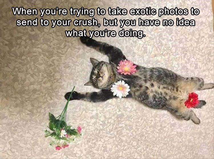 cat meme - Cat - When you're trying to take exotic photos to send to your crush, but you have no idea what youre doing.