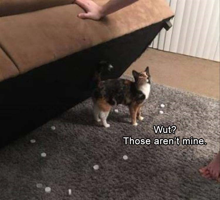 cat meme - Mammal - Wut? Those aren't mine.