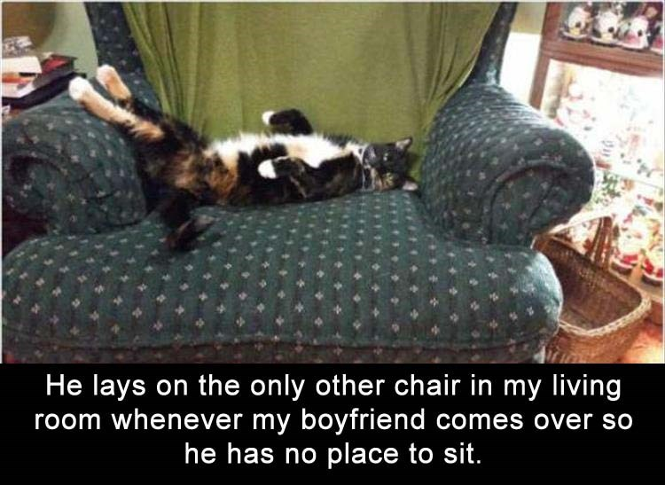 cat meme - Furniture - He lays on the only other chair in my living room whenever my boyfriend comes over so he has no place to sit.